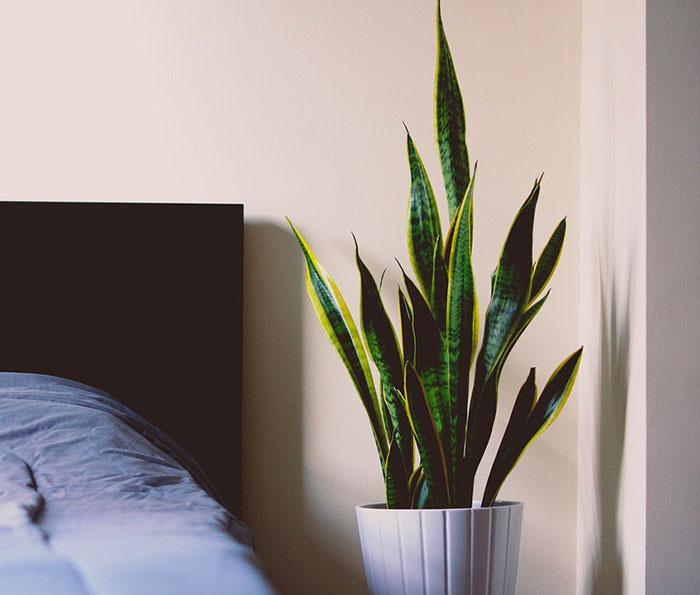 Plante dans un coin