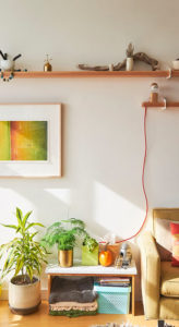 Plante pour décorer un mur