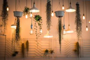 Intégrer des plantes dans sa décoration intérieure