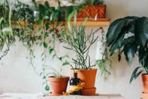 pot decoration terre cuite plantes